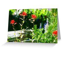Mountain wild flowers. Greeting Card