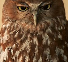 Not happy Jan! Barking Owl with attitude by Georgina Steytler