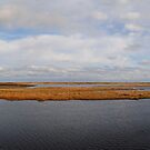 Pamlico Sound From Bodie Island by Robin Lee