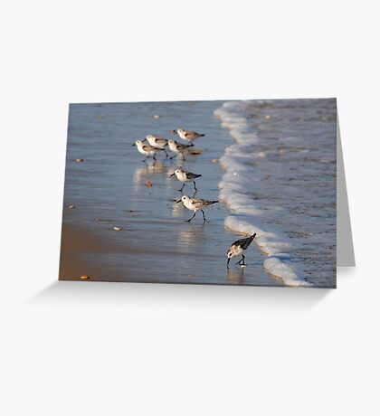 Piping Plovers Greeting Card