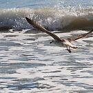 In Flight by Robin Lee