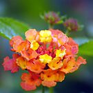 Flowers by Robin Black