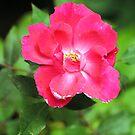 Flower by Robin Lee