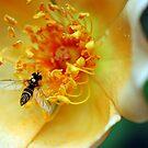 Rose Garden by Robin Black