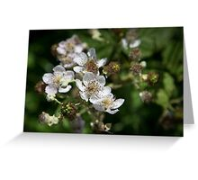 Blackberry Blossom Greeting Card