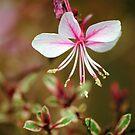 Flowers 3 by Robin Lee
