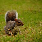 Squirrel 2 by Robin Lee