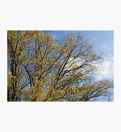 October Sky Photographic Print