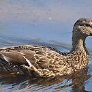 Duck, Duck by Robin Black