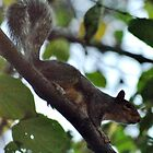 Squirrel by Robin Lee