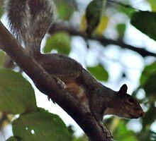 Squirrel by Robin Black