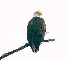 Eagle 1 by richchop
