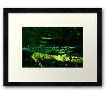 Northwest forest Framed Print