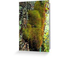 Moss, Buried Village, Rotorua New Zealand Greeting Card