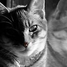 kitty by the window by tego53