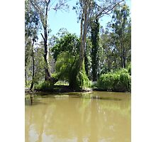 On the Murray: Barmah, Australia Photographic Print