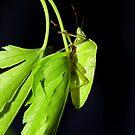 Bug Green by Kevin Brett