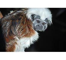 Little Monkey Business Photographic Print