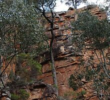 Aligator Gorge, Flinders Ranges - SA by Congolli