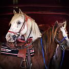 """Skipper & Mr. Pony"" by Melinda Stewart Page"