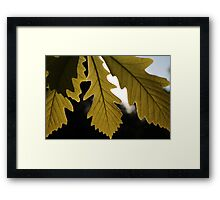 Leaves on a Sunny Day Framed Print