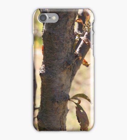 Autumn Bark iPhone Case/Skin