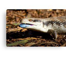 australia reptile Canvas Print