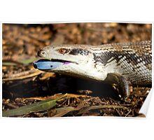 australia reptile Poster