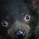 Tasmanian Devil by Stephie Dickson