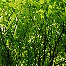 Green Leaves by Clare McClelland