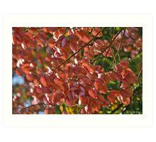 Autumnal Poem Art Print
