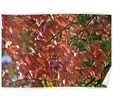 Autumnal Poem Poster
