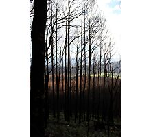 Post February 2009 Bushfires Victoria - Marysville July09 Photographic Print