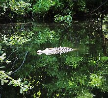Alligator In The Middle by Cynthia48
