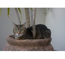 DAISY IN THE FLOWER POT Photographic Print