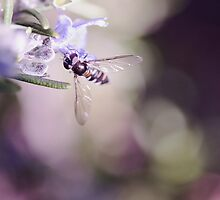 Pretty Robber Fly by jayneeldred