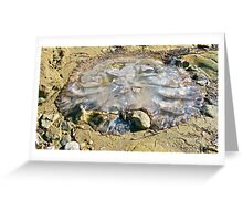 Stranded jellyfish at Port  Vincent Greeting Card