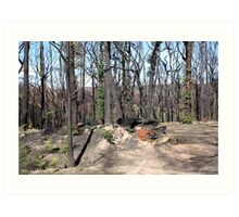 Post February 2009 Bushfires - west of Kinglake June09 Art Print