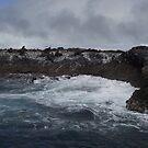 Bull Island - by Stanley (n.w. Tasmania) by gaylene