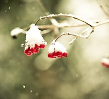 A Very Berry Christmas by fotozo