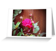 Pink Perfection  Greeting Card