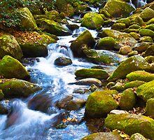 Calming by photosbyflood