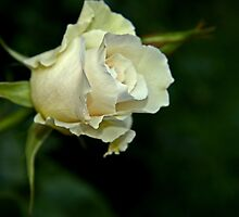 """Margaret Merril................."" by Rosehaven"