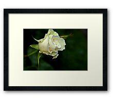 """""""Margaret Merril................."""" Framed Print"""