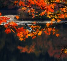 REFLECTIONS by TOM YORK