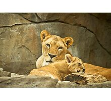 African Cats - 3   / Watchful Mother Photographic Print