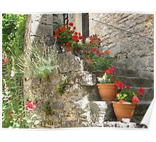 Decorative potted plants Poster