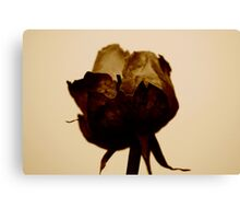 Paper Rose Canvas Print
