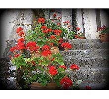 Red geranium Photographic Print