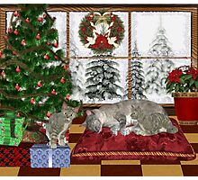 Cat and Kittens .. December Cats Photographic Print